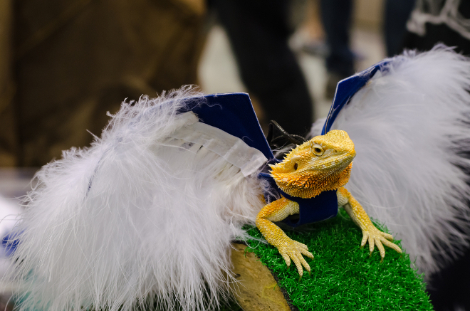 bearded dragon costume gift