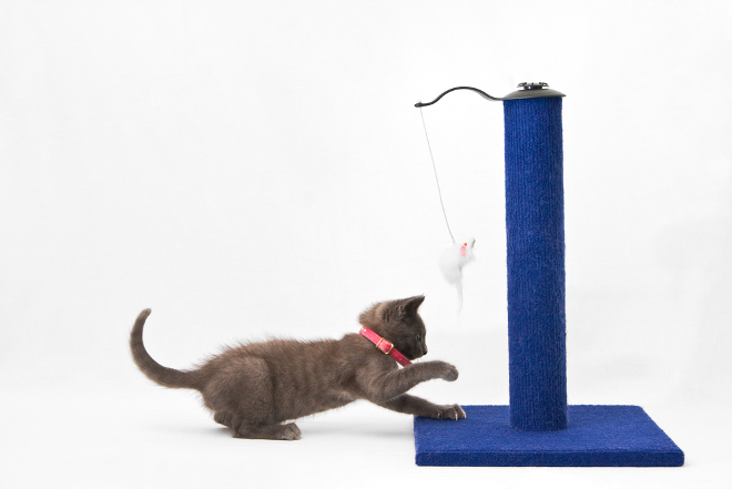 cat scraching post gift