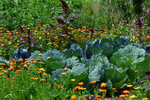 5 Gardening Tips And Tricks For Beginners