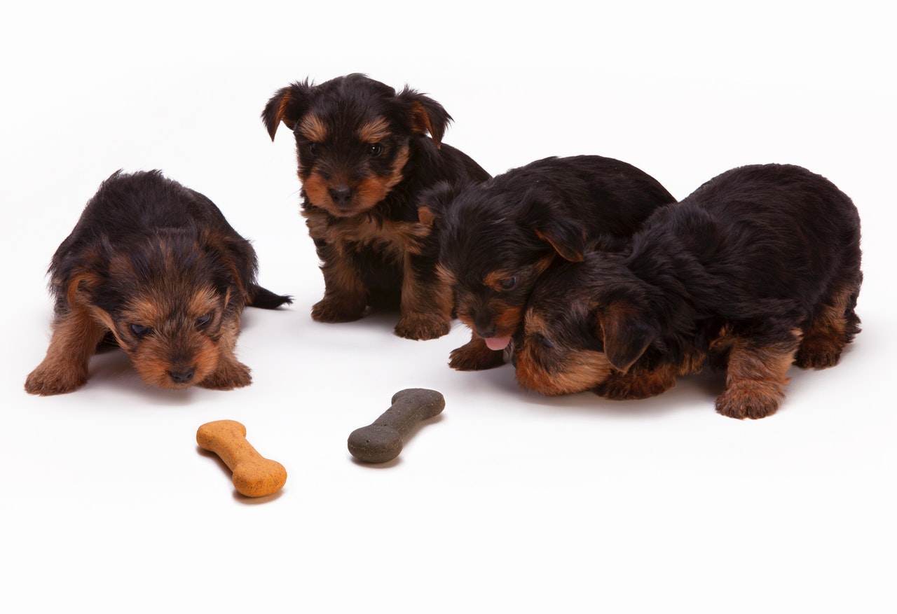 All that you need to know on dog food – A guide for the first-time-parents